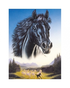Black Horse and Herd