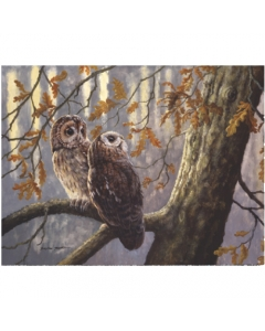 Tawny Owls In Autumn Wood